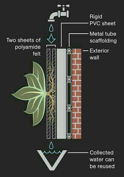 روش اجرای دیواره سبز